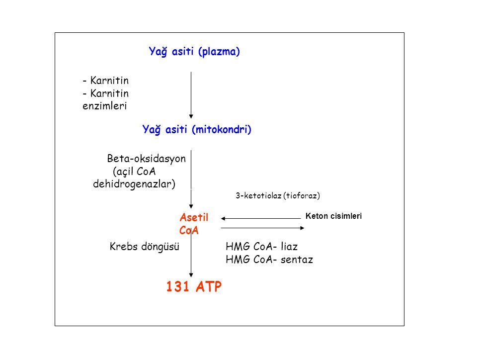 Yağ asiti (plazma) Asetil CoA Yağ asiti (mitokondri) - Karnitin - Karnitin enzimleri Beta-oksidasyon (açil CoA dehidrogenazlar) 131 ATP Keton cisimler