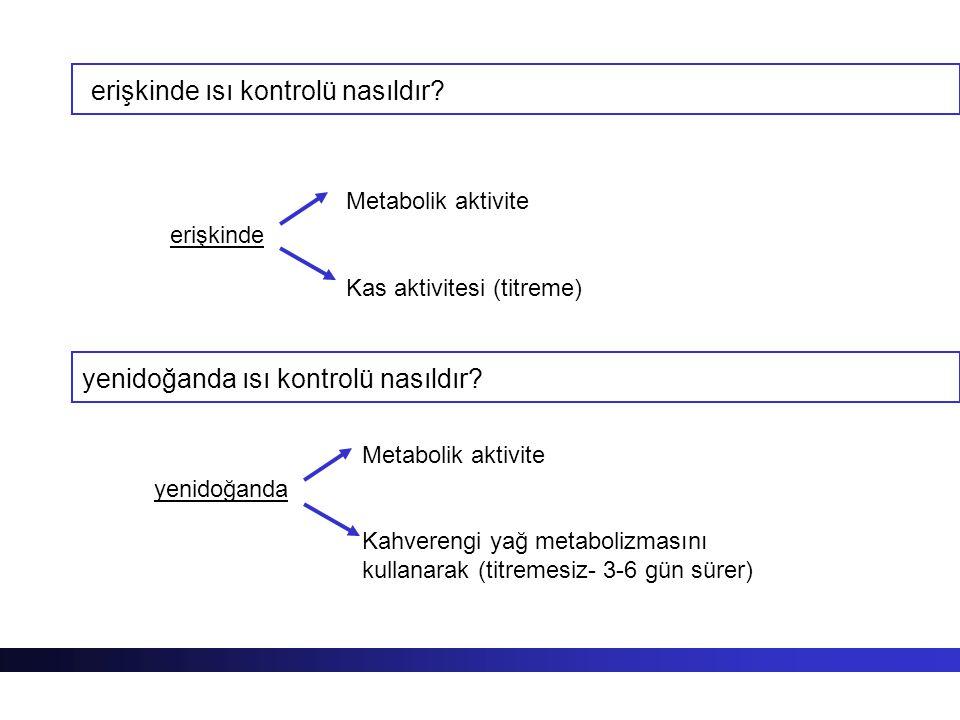 erişkinde ısı kontrolü nasıldır? erişkinde Metabolik aktivite Kas aktivitesi (titreme) yenidoğanda Metabolik aktivite Kahverengi yağ metabolizmasını k