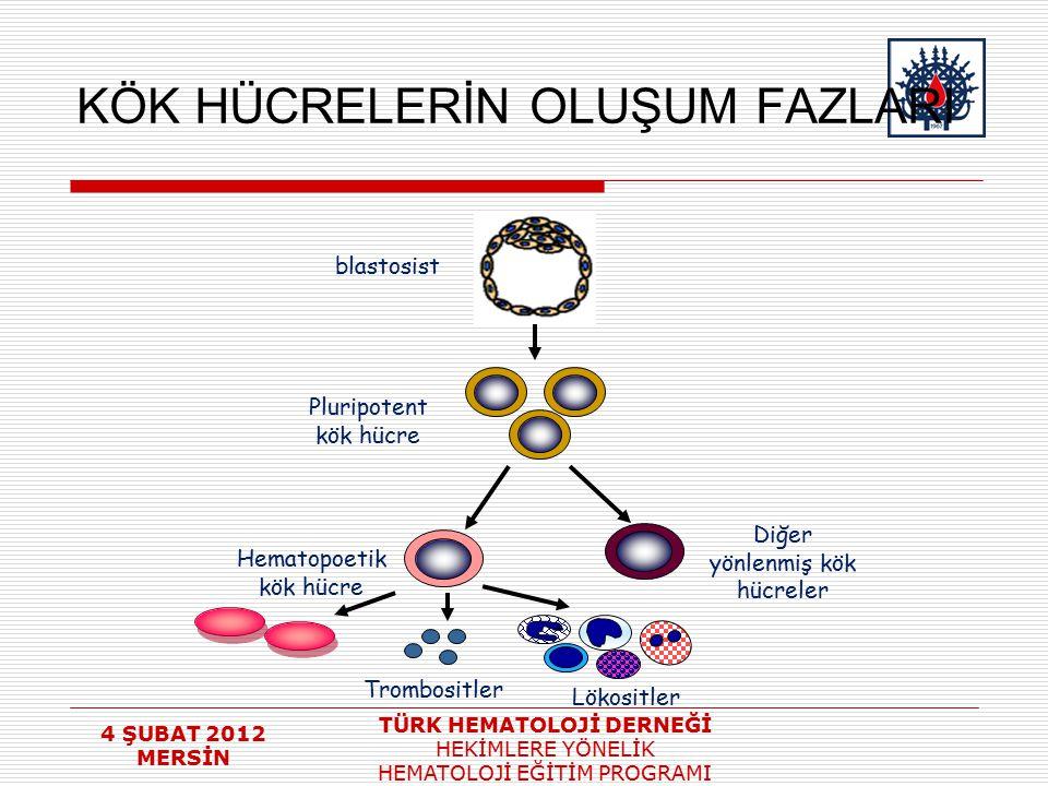 4 ŞUBAT 2012 MERSİN TÜRK HEMATOLOJİ DERNEĞİ HEKİMLERE YÖNELİK HEMATOLOJİ EĞİTİM PROGRAMI KÖK HÜCRELERİN OLUŞUM FAZLARI Pluripotent kök hücre blastosis