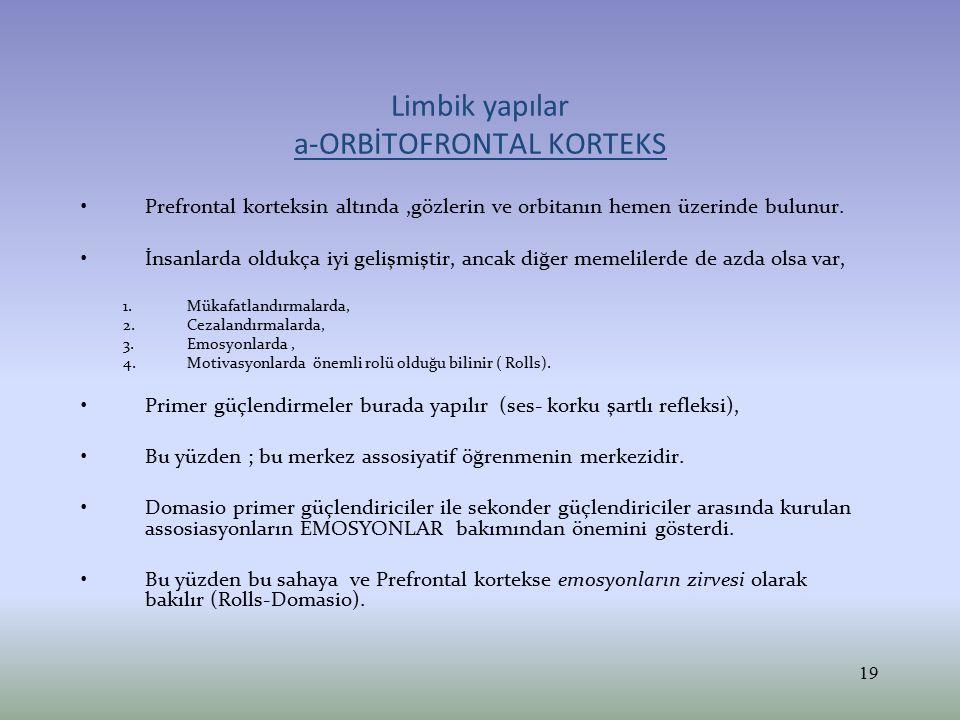 Limbik yapılar a-ORBİTOFRONTAL KORTEKS Prefrontal korteksin altında,gözlerin ve orbitanın hemen üzerinde bulunur. İnsanlarda oldukça iyi gelişmiştir,