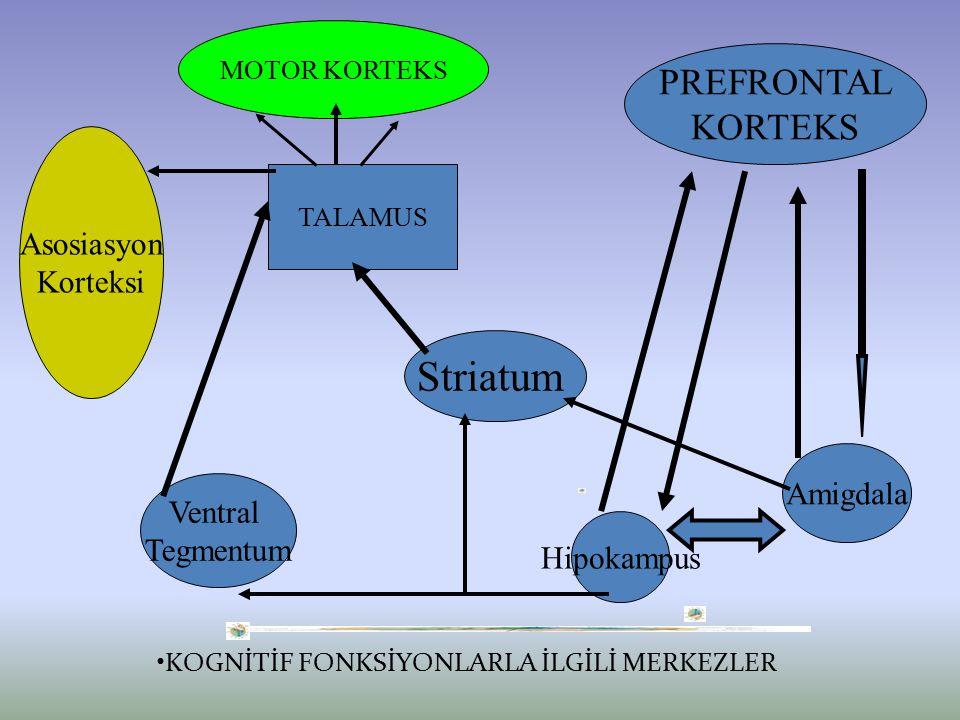 KOGNİTİF FONKSİYONLARLA İLGİLİ MERKEZLER PREFRONTAL KORTEKS Amigdala Hipokampus Striatum Ventral Tegmentum TALAMUS MOTOR KORTEKS Asosiasyon Korteksi