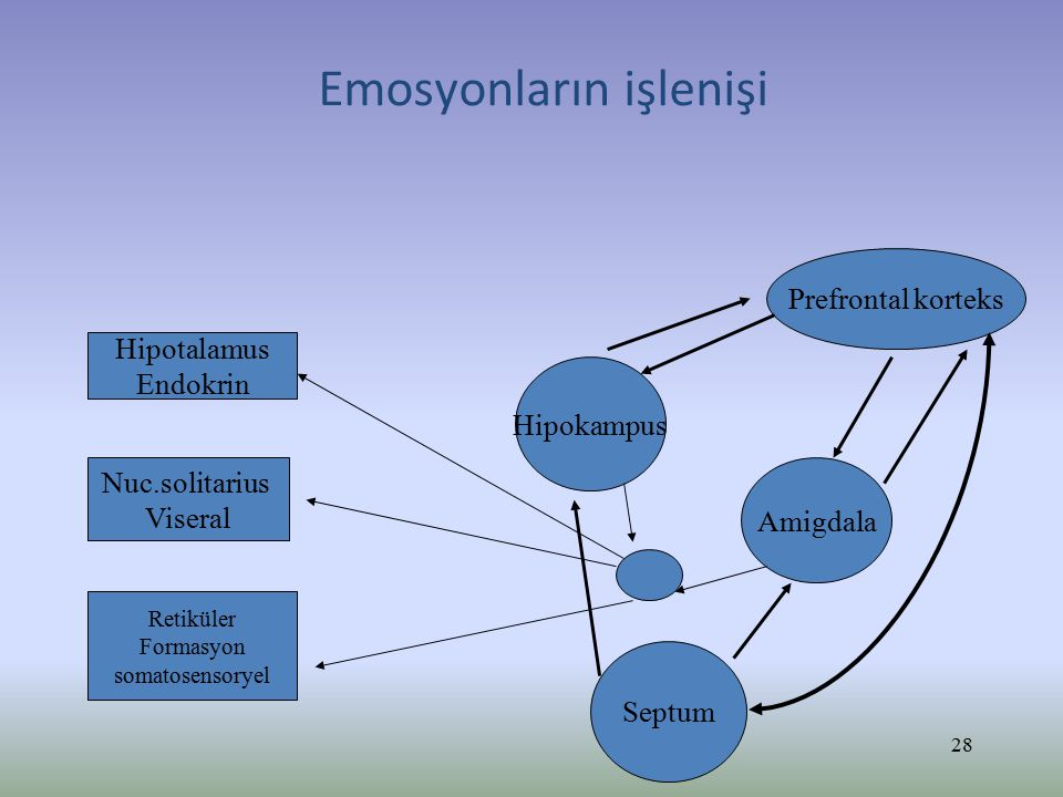 Emosyonların işlenişi Prefrontal korteks Amigdala Hipokampus Septum Hipotalamus Endokrin Nuc.solitarius Viseral Retiküler Formasyon somatosensoryel 28