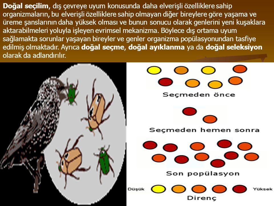 varyasyon Değişik biçim, varyete Örnek: Kültür düzeyine göre de çeşitli varyasyonlar gösterebilsin.