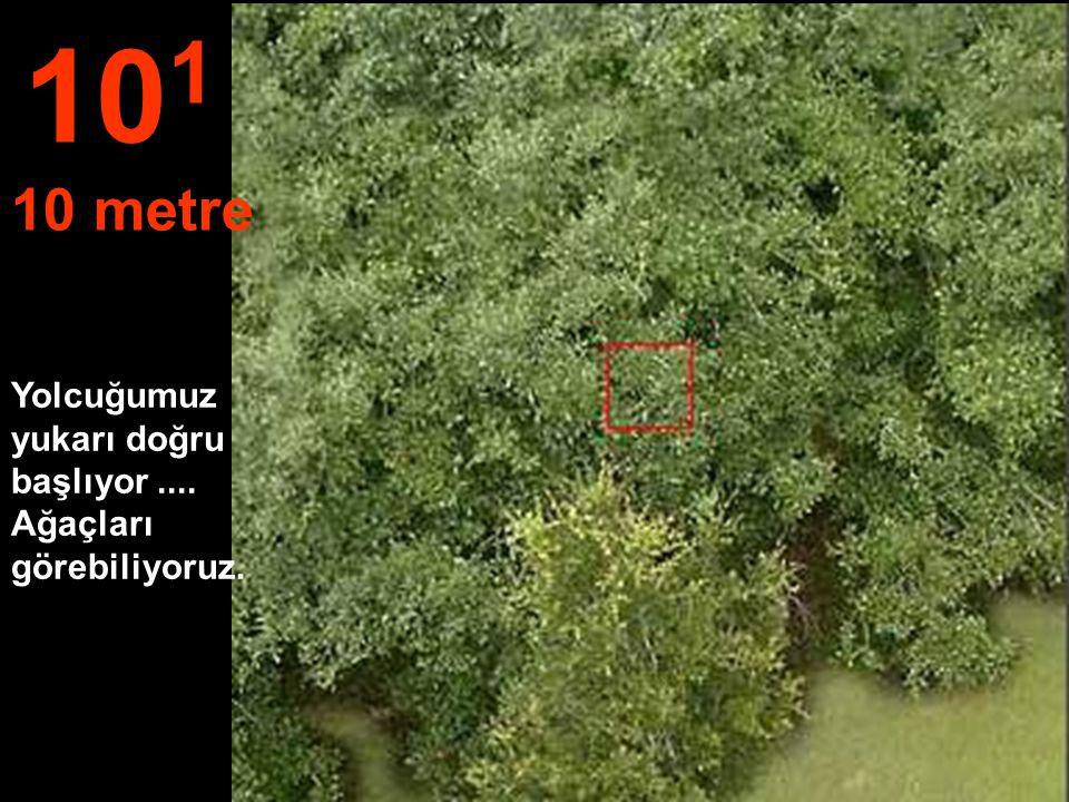 Bir bahçe ve bir tutam yaprak mesafesi, 10 0 1 metre