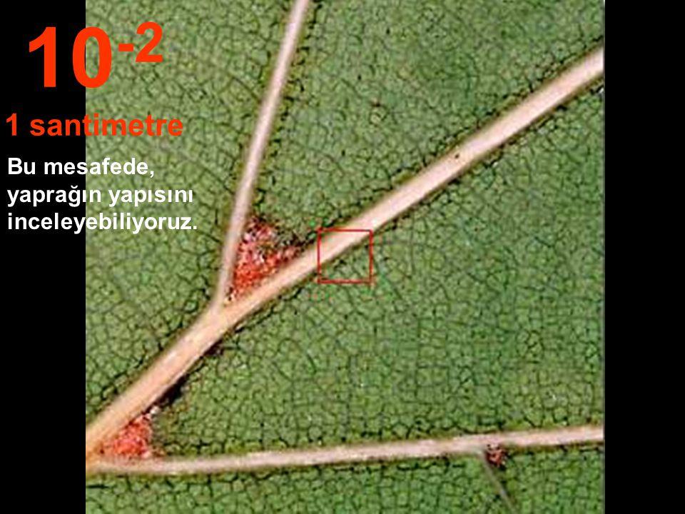 10 cm yakındayız....Yaprakların resmini bile çizebiliriz. 10 -1 10 Santimetre