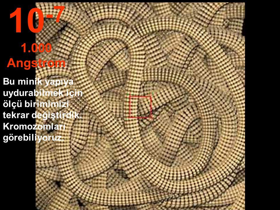 Hücre çekirdeği görülebiliyor. 10 -6 1 mikron