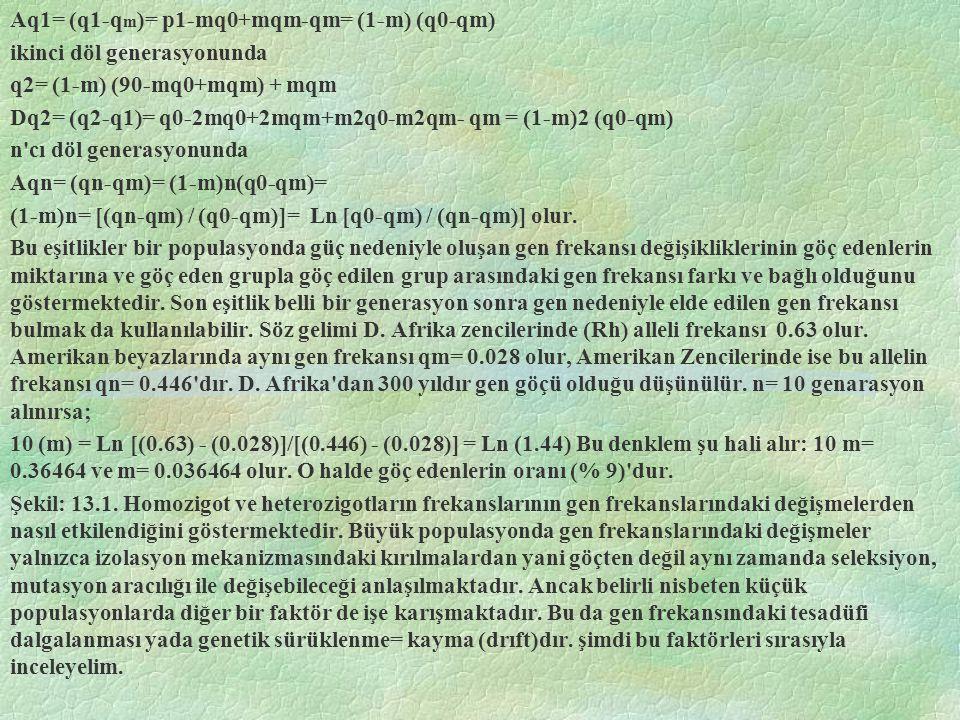 Aq1= (q1-q m )= p1-mq0+mqm-qm= (1-m) (q0-qm) ikinci döl generasyonunda q2= (1-m) (90-mq0+mqm) + mqm Dq2= (q2-q1)= q0-2mq0+2mqm+m2q0-m2qm- qm = (1-m)2 (q0-qm) n cı döl generasyonunda Aqn= (qn-qm)= (1-m)n(q0-qm)= (1-m)n= [(qn-qm) / (q0-qm)]= Ln [q0-qm) / (qn-qm)] olur.
