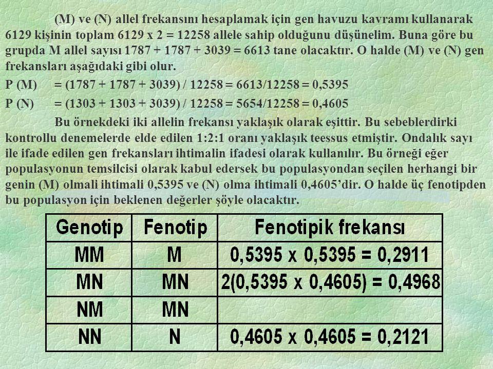 (M) ve (N) allel frekansını hesaplamak için gen havuzu kavramı kullanarak 6129 kişinin toplam 6129 x 2 = 12258 allele sahip olduğunu düşünelim.