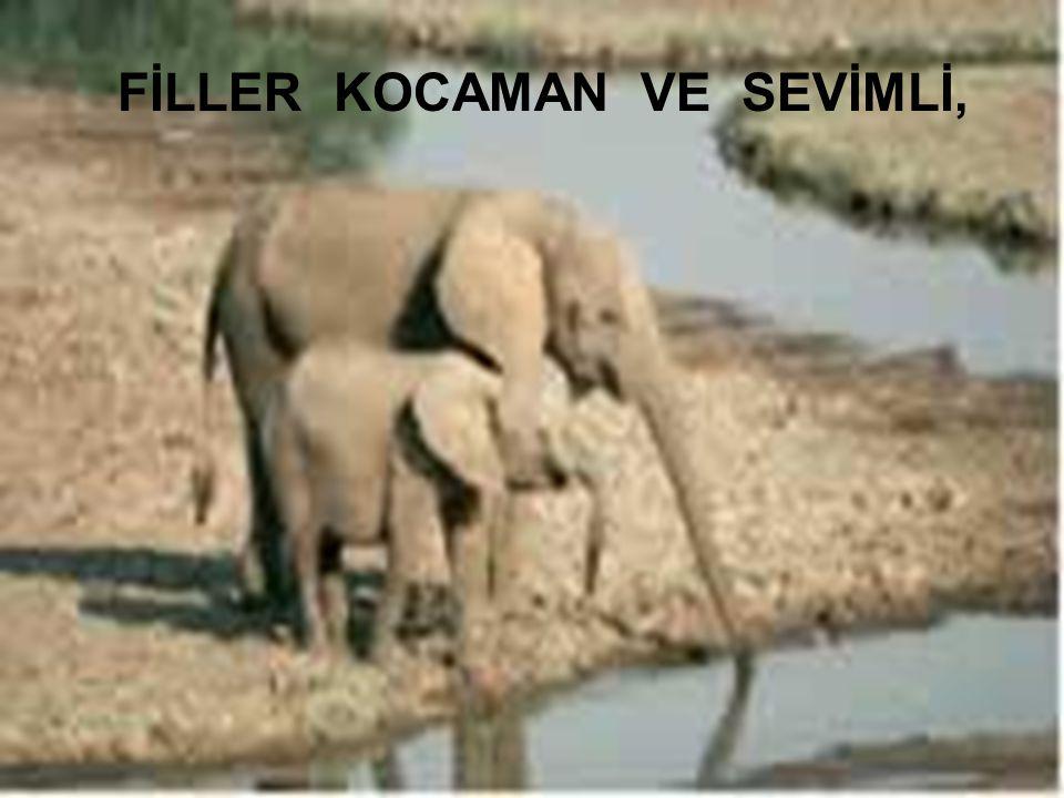 Kadiriye Özer FİLLER KOCAMAN VE SEVİMLİ,