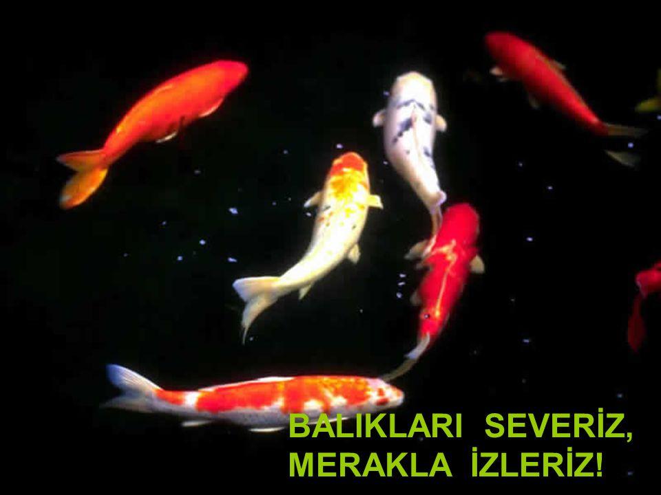 Kadiriye Özer, BALIKLARI SEVERİZ, MERAKLA İZLERİZ!