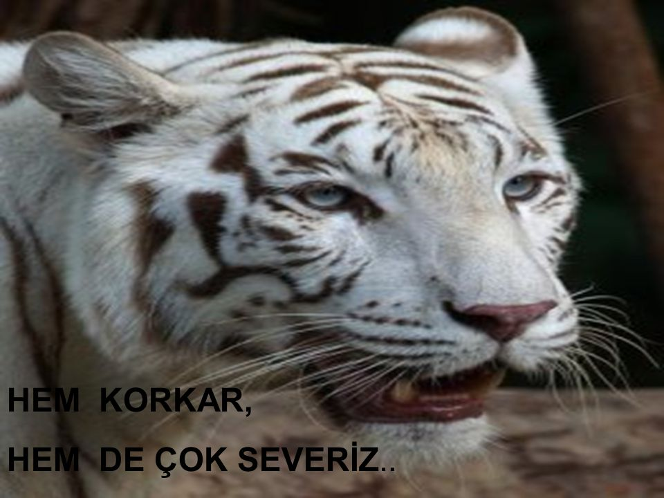 Kadiriye Özer HEM KORKAR, HEM DE ÇOK SEVERİZ..