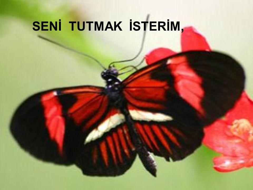 Kadiriye Özer SENİ TUTMAK İSTERİM,