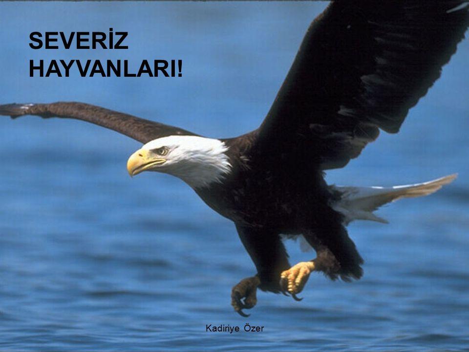 SEVERİZ HAYVANLARI!