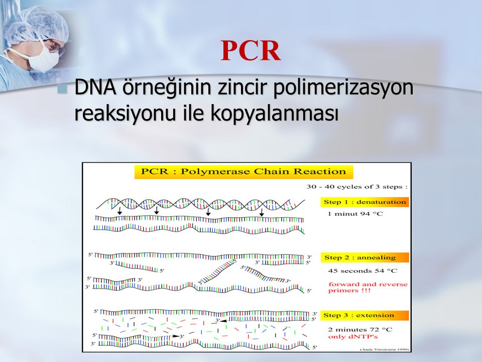 DNA örneğinin zincir polimerizasyon reaksiyonu ile kopyalanması DNA örneğinin zincir polimerizasyon reaksiyonu ile kopyalanması PCR