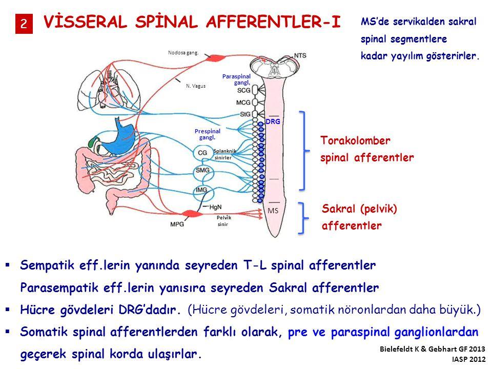 VİSSERAL SPİNAL AFFERENTLER-I  Sempatik eff.lerin yanında seyreden T-L spinal afferentler Parasempatik eff.lerin yanısıra seyreden Sakral afferentler