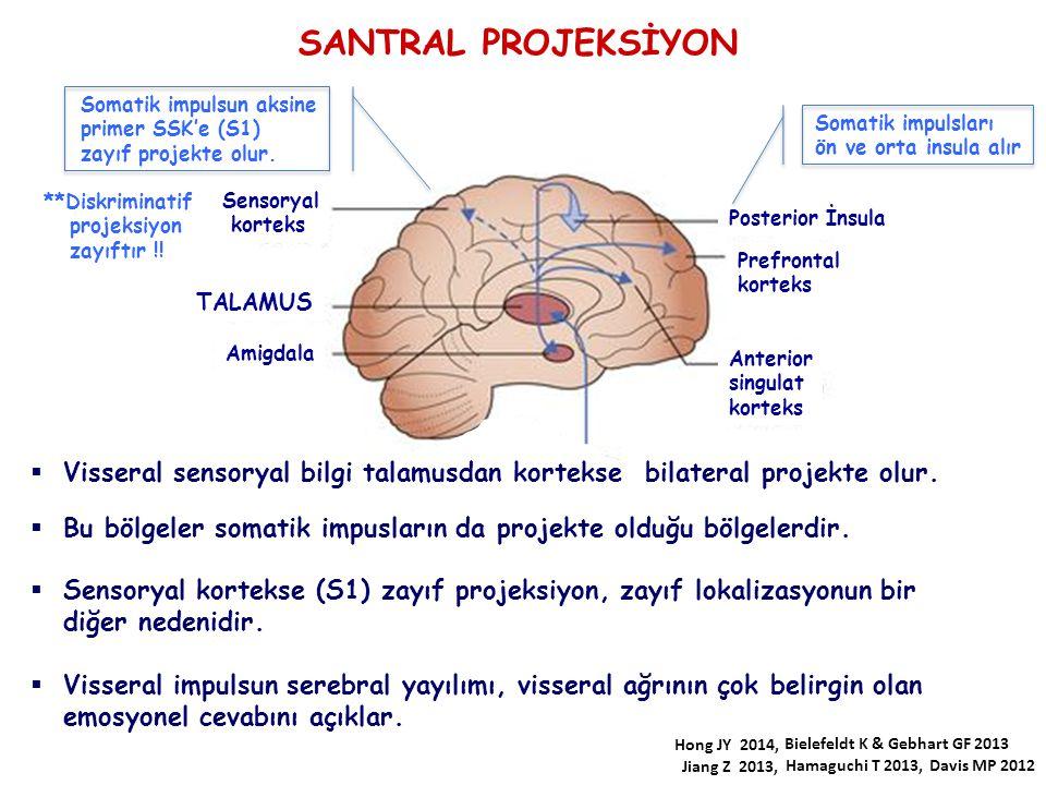 Anterior singulat korteks Prefrontal korteks Posterior İnsula Sensoryal korteks TALAMUS Amigdala SANTRAL PROJEKSİYON Somatik impulsları ön ve orta ins