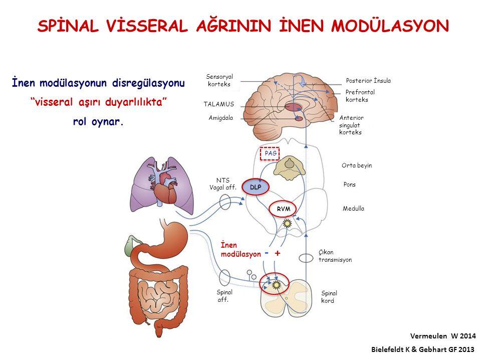 Sensoryal korteks TALAMUS Amigdala Anterior singulat korteks Prefrontal korteks Posterior İnsula Orta beyin Pons Medulla NTS Vagal aff. İnen modülasyo