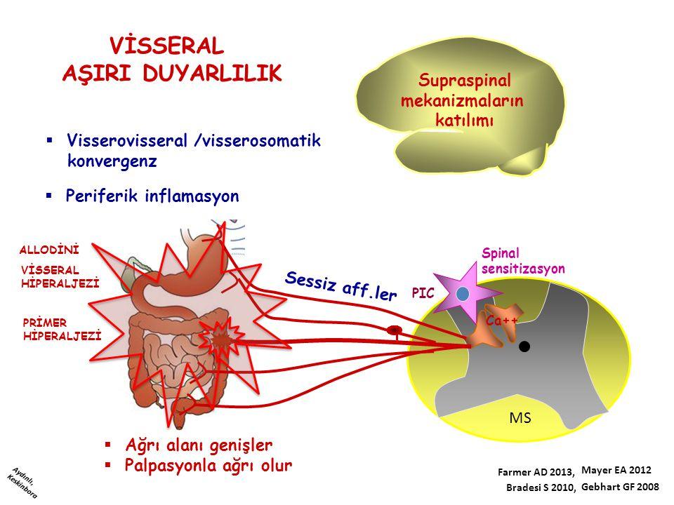 Spinal sensitizasyon PIC MS Ca++ Supraspinal mekanizmaların katılımı VİSSERAL HİPERALJEZİ PRİMER HİPERALJEZİ Sessiz aff.ler ALLODİNİ  Visserovisseral