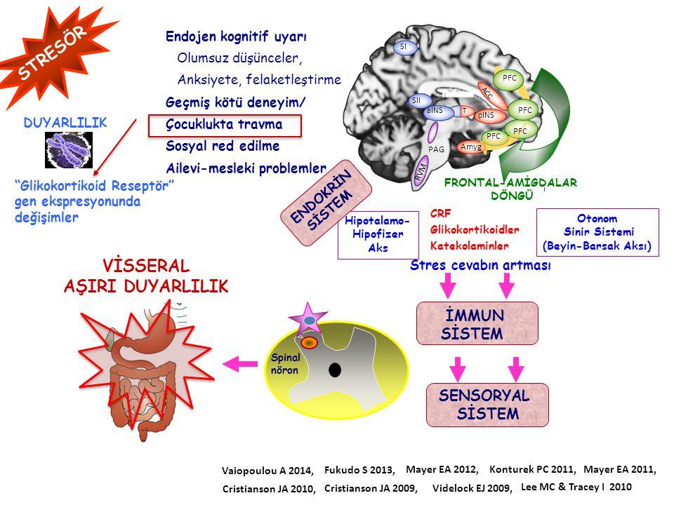 STRESÖR Amyg PAG PFC ACC aINS SII SI pINS RVM T PFC Hipotalamo- Hipofizer Aks Endojen kognitif uyarı Olumsuz düşünceler, Anksiyete, felaketleştirme Ge