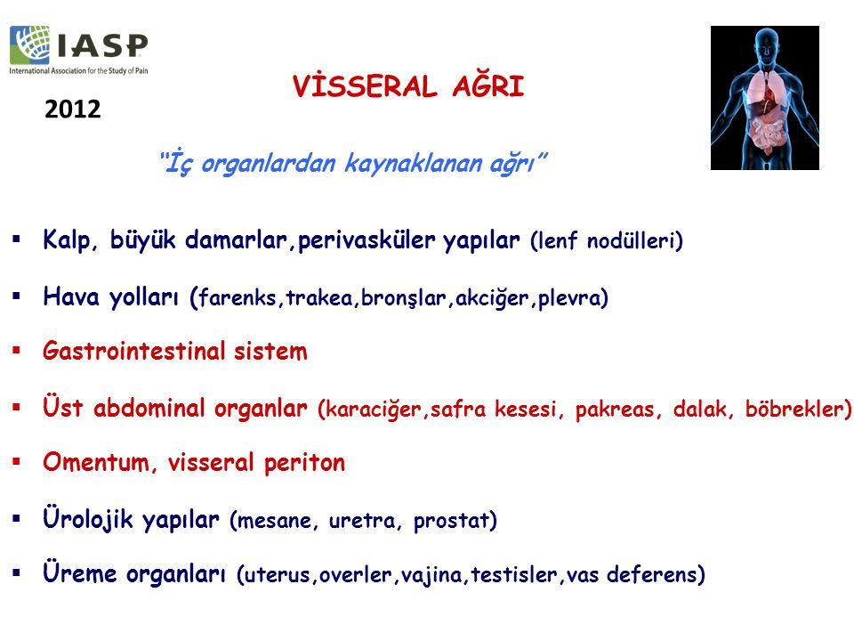  Kalp, büyük damarlar,perivasküler yapılar (lenf nodülleri)  Hava yolları ( farenks,trakea,bronşlar,akciğer,plevra)  Gastrointestinal sistem  Üst