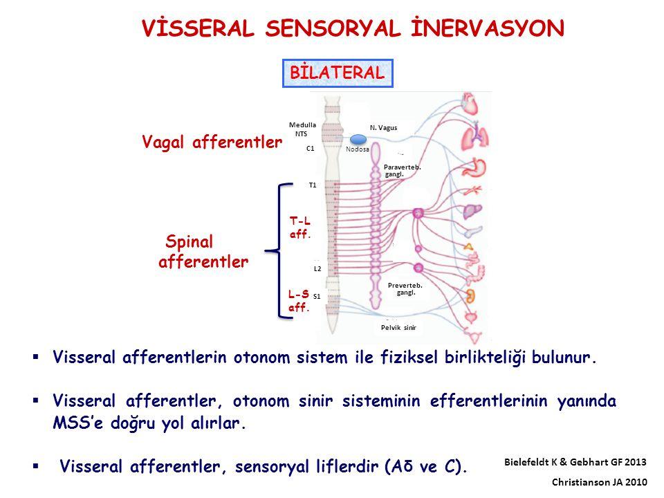 VİSSERAL SENSORYAL İNERVASYON  Visseral afferentlerin otonom sistem ile fiziksel birlikteliği bulunur.  Visseral afferentler, otonom sinir sistemini