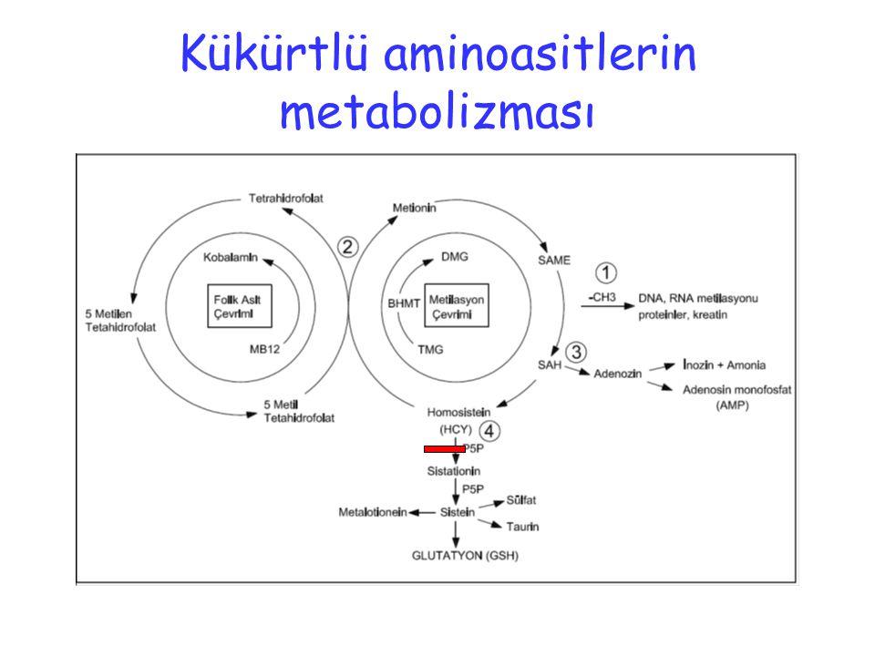 Kükürtlü aminoasitlerin metabolizması