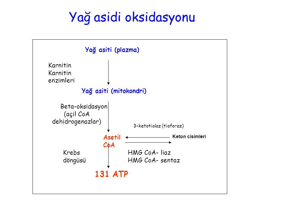Yağ asiti (plazma) Asetil CoA Yağ asiti (mitokondri) Karnitin Karnitin enzimleri Beta-oksidasyon (açil CoA dehidrogenazlar) 131 ATP Keton cisimleri HMG CoA- liaz HMG CoA- sentaz 3-ketotiolaz (tioforaz) Krebs döngüsü Yağ asidi oksidasyonu