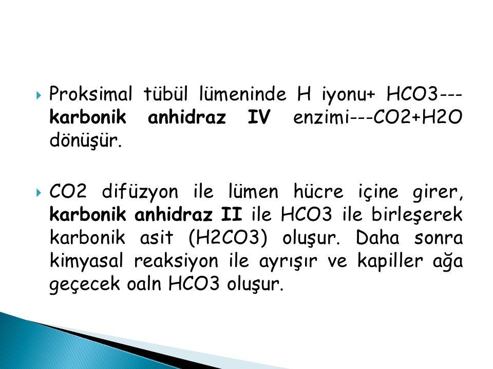  Proksimal tübül lümeninde H iyonu+ HCO3--- karbonik anhidraz IV enzimi---CO2+H2O dönüşür.  CO2 difüzyon ile lümen hücre içine girer, karbonik anhid