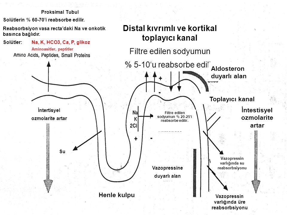 Toplayıcı kanal Proksimal Tubul Solütlerin % 60-70'i reabsorbe edilir. Reabsorbsiyon vasa recta'daki Na ve onkotik basınca bağlıdır. Solütler:Na, K, H