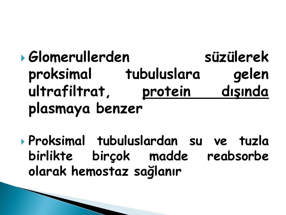  Glomerullerden süzülerek proksimal tubuluslara gelen ultrafiltrat, protein dışında plasmaya benzer  Proksimal tubuluslardan su ve tuzla birlikte bi
