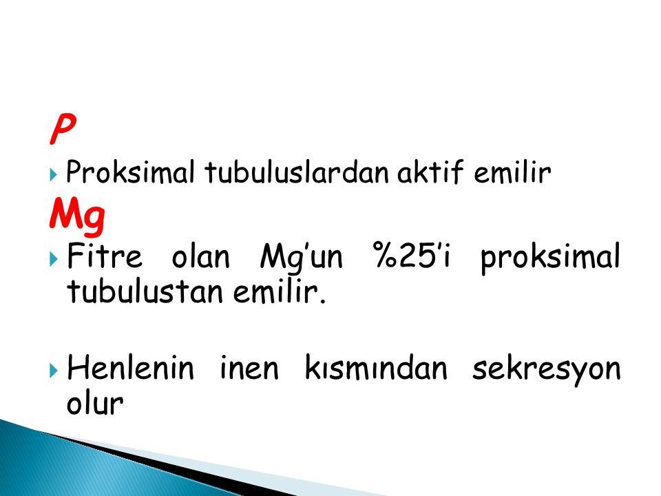 P  Proksimal tubuluslardan aktif emilir Mg  Fitre olan Mg'un %25'i proksimal tubulustan emilir.  Henlenin inen kısmından sekresyon olur