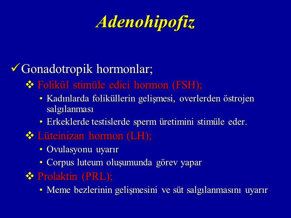 Adenohipofiz Metabolik hormonlar; Metabolik hormonlar;  Growth hormon (büyüme hormonu = GH); Somatotrop hücrelerden salgılanırSomatotrop hücrelerden salgılanır Büyümeyi ve metabolizmayı stimüle ederBüyümeyi ve metabolizmayı stimüle eder Protein sentezini uyarırProtein sentezini uyarır  Adrenokortikotrop hormon (ACTH); Kortikotrop hücrelerden salgılanırKortikotrop hücrelerden salgılanır Adrenal korteksten glukokortikoidlerin salgılanmasını sağlarAdrenal korteksten glukokortikoidlerin salgılanmasını sağlar  Melanosit stimüle eden hormon (MSH); Kortikotrop hücrelerden salgılanırKortikotrop hücrelerden salgılanır Deri pigmentasyonundan sorumludurDeri pigmentasyonundan sorumludur  Tiroid stimüle edici hormon (TSH); Tirotrop hücrelerden salgılanırTirotrop hücrelerden salgılanır Tiroid bezi salgılarını düzenlerTiroid bezi salgılarını düzenler