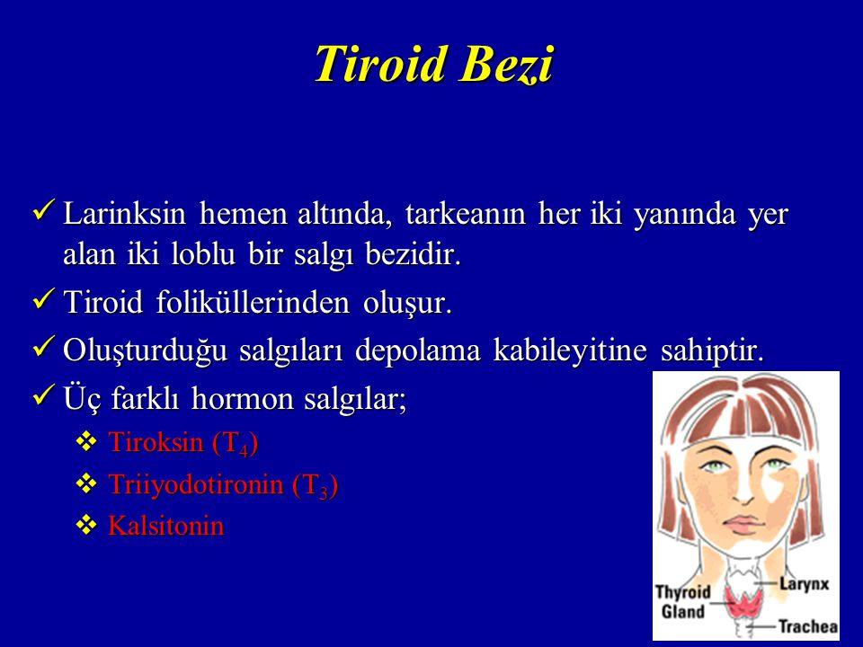Tiroid Bezi Tiroid hormonlarını sentezi için iyot gereklidir.