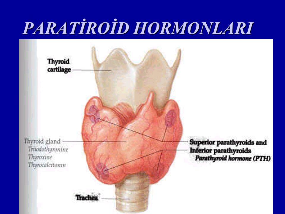 Adrenal Bezler Her iki böbreğin üst kısmına yerleşmişlerdir.