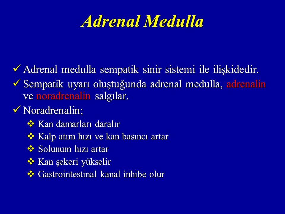 Adrenal Medulla Adrenalin; Adrenalin;  Kalp üzerine etkileri noradrenalinden daha güçlüdür  Adrenalin kan damarlarını hafifçe daraltır  Adrenalin vücut metabolizmasını normalin % 100 üstüne çıkarabilir
