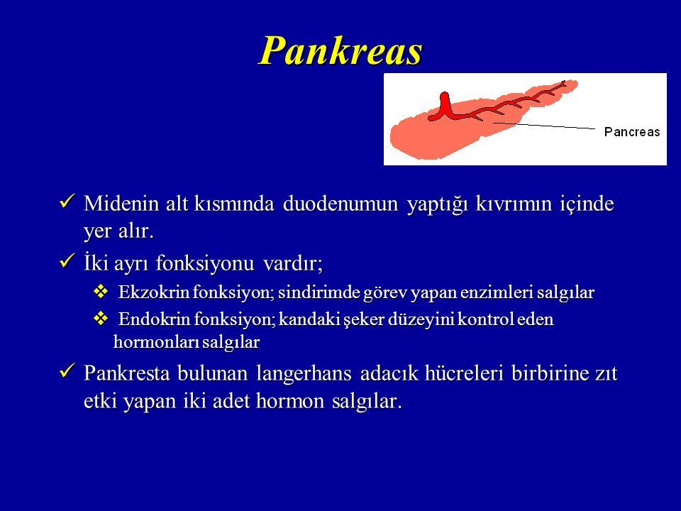 Pankreas İnsülin; İnsülin;  Langerhans adacıklarındaki  -hücreleri tarafından salgılanır.