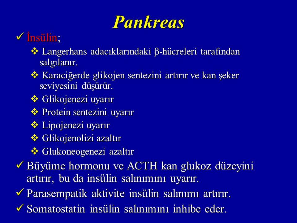 Pankreas Glukagon; Glukagon;  Langerhans adacıklarındaki  -hücrelerinden salgılanır.
