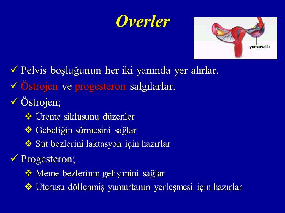 Overler Overlerde ayrıca inhibin ve relaksin hormonları da salınır.