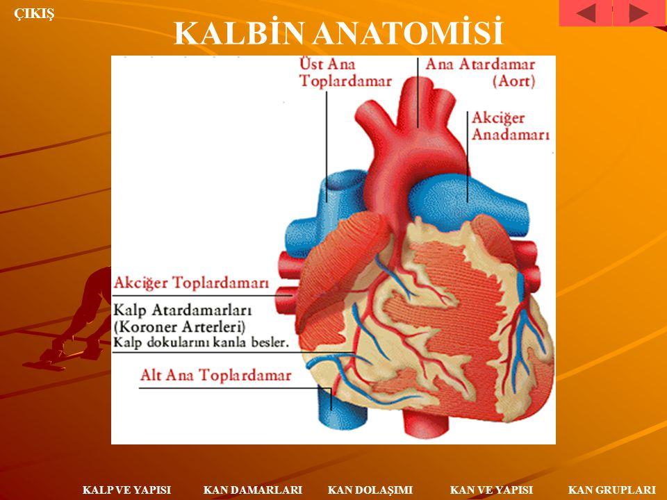 ÇIKIŞ KAN DAMARLARI KALP VE YAPISI KAN DOLAŞIMI KAN VE YAPISI KAN GRUPLARI Kalbin sağ kulakçığına bağlı alt ve üst ana toplardamarlar vücudun faklı bölümlerinde kirlenmiş kanı kalbe getirir.