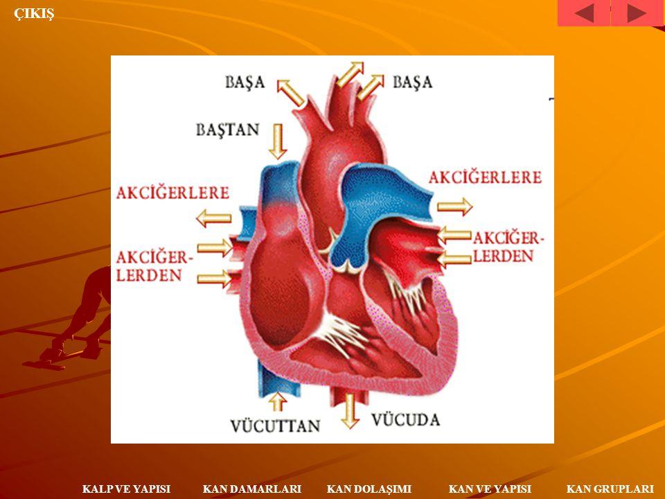 ÇIKIŞ KAN DAMARLARI KALP VE YAPISI KAN DOLAŞIMI KAN VE YAPISI KAN GRUPLARI KANIN İZLEDİĞİ YOL Kan vücutta iki yolla dolaşır: Oksijen almak için akciğerlerle kalp arasında (KÜÇÜK KAN DOLAŞIMI), besin ve oksijen dağıtmak için kalple vücudun diğer bölümleri arasında (BÜYÜK KAN DOLAŞIMI).
