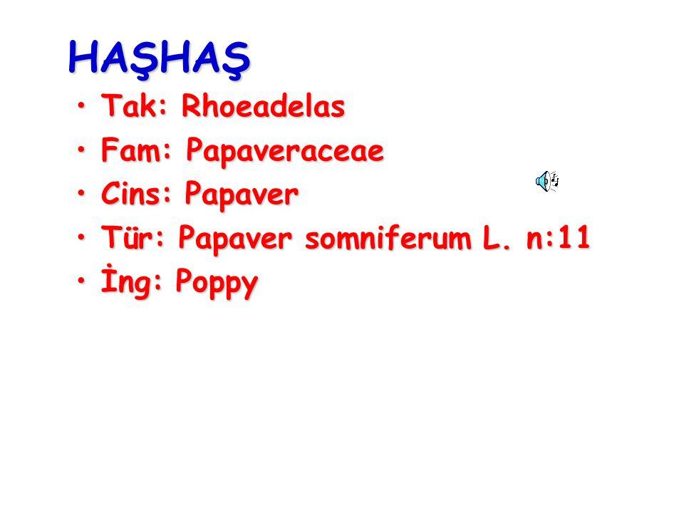 HAŞHAŞ Tak: RhoeadelasTak: Rhoeadelas Fam: PapaveraceaeFam: Papaveraceae Cins: PapaverCins: Papaver Tür: Papaver somniferum L. n:11Tür: Papaver somnif