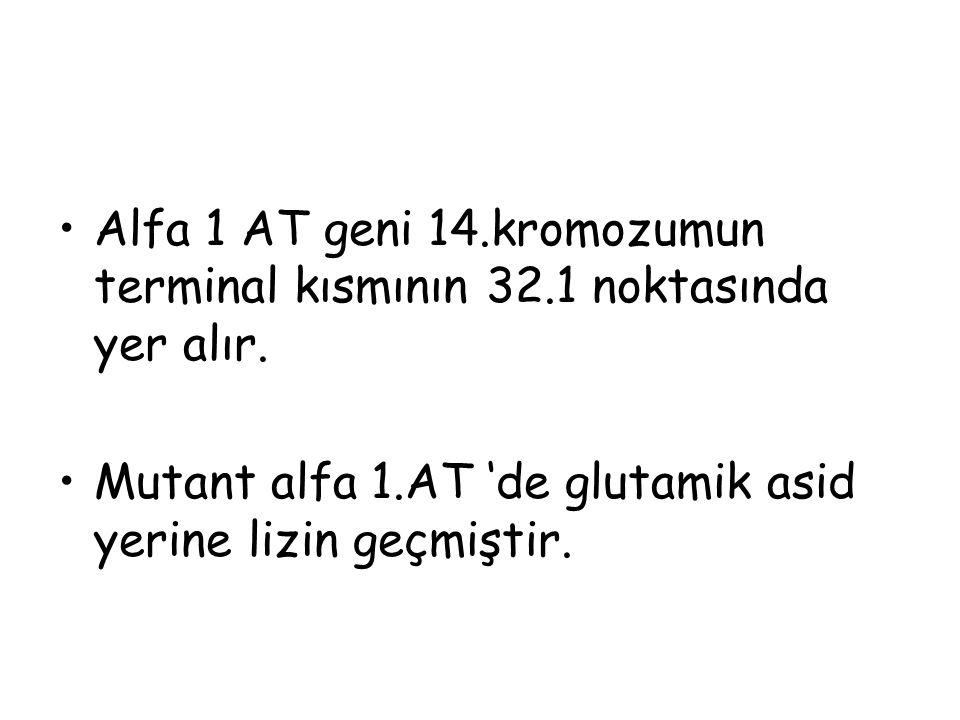 Alfa 1 AT geni 14.kromozumun terminal kısmının 32.1 noktasında yer alır. Mutant alfa 1.AT 'de glutamik asid yerine lizin geçmiştir.