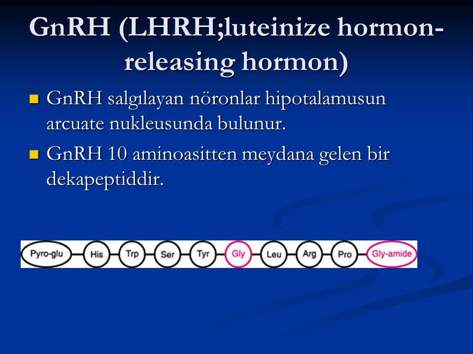 GnRH (LHRH;luteinize hormon- releasing hormon) GnRH salgılayan nöronlar hipotalamusun arcuate nukleusunda bulunur. GnRH salgılayan nöronlar hipotalamu