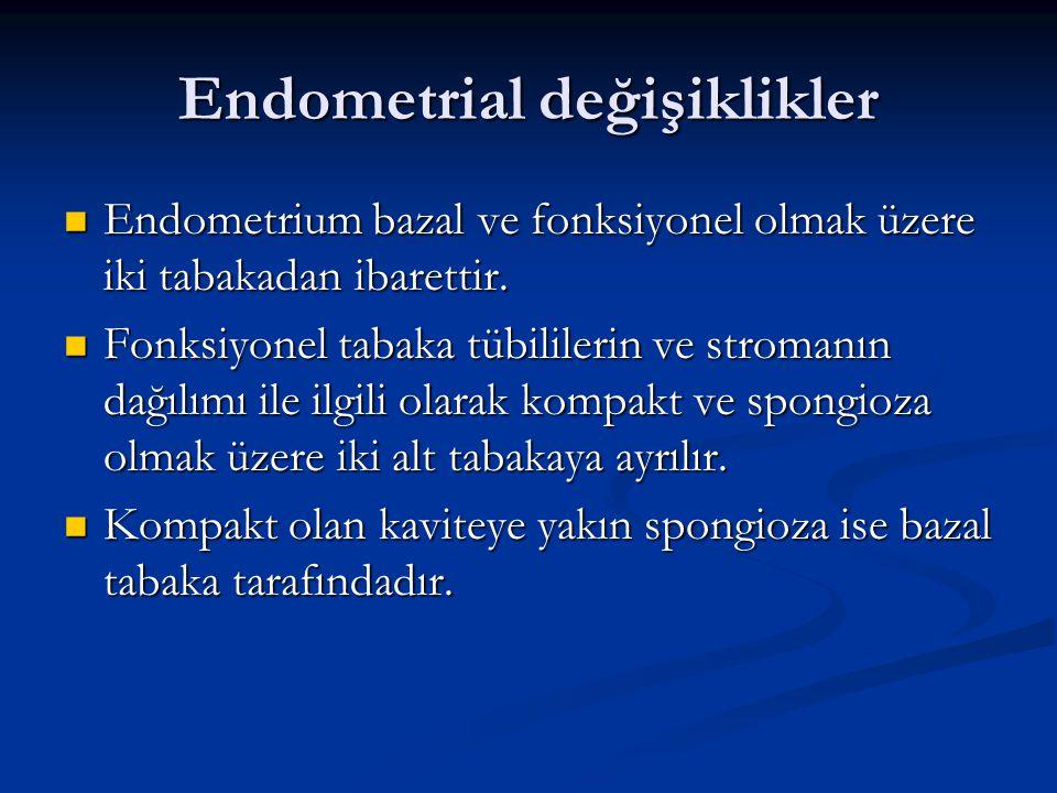 Endometrial değişiklikler Endometrium bazal ve fonksiyonel olmak üzere iki tabakadan ibarettir. Endometrium bazal ve fonksiyonel olmak üzere iki tabak