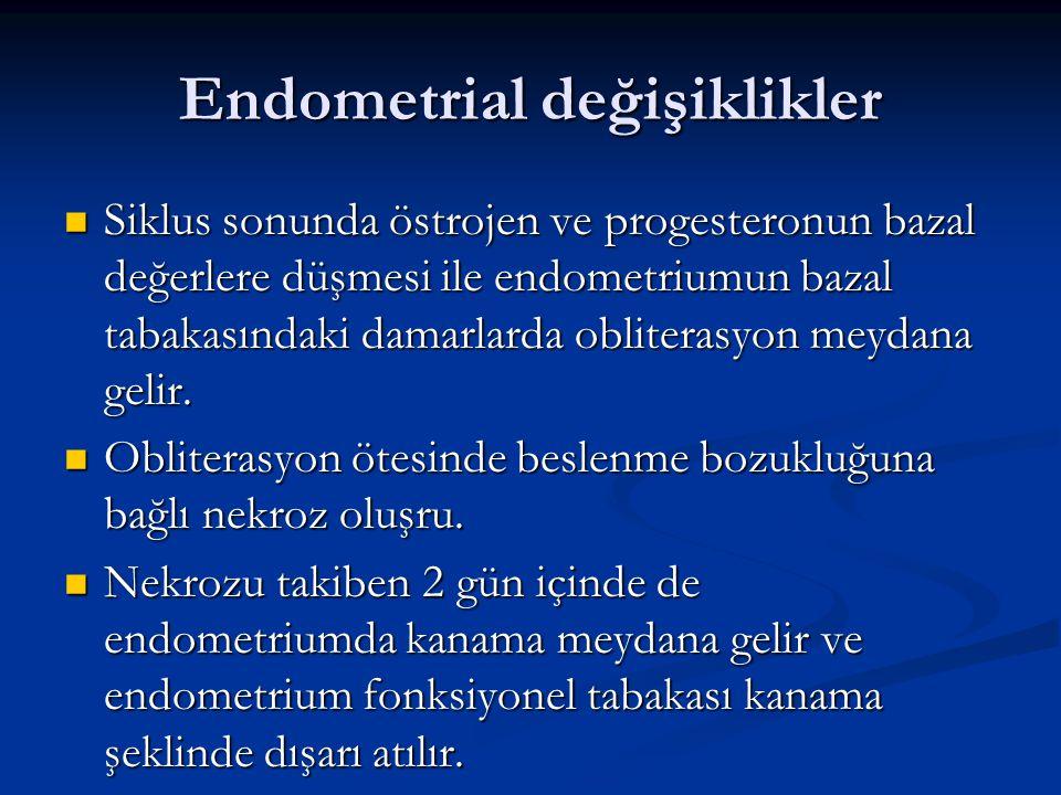 Endometrial değişiklikler Siklus sonunda östrojen ve progesteronun bazal değerlere düşmesi ile endometriumun bazal tabakasındaki damarlarda obliterasy