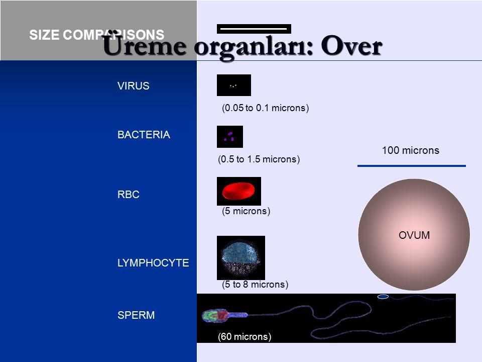 10 microns (0.01mm) (0.05 to 0.1 microns) (0.5 to 1.5 microns) (5 microns) (5 to 8 microns) (60 microns) VIRUS BACTERIA RBC LYMPHOCYTE SPERM SIZE COMP