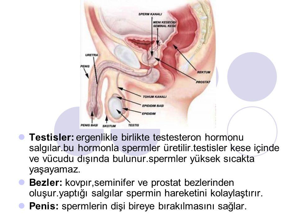 Testisler: ergenlikle birlikte testesteron hormonu salgılar.bu hormonla spermler üretilir.testisler kese içinde ve vücudu dışında bulunur.spermler yüksek sıcakta yaşayamaz.
