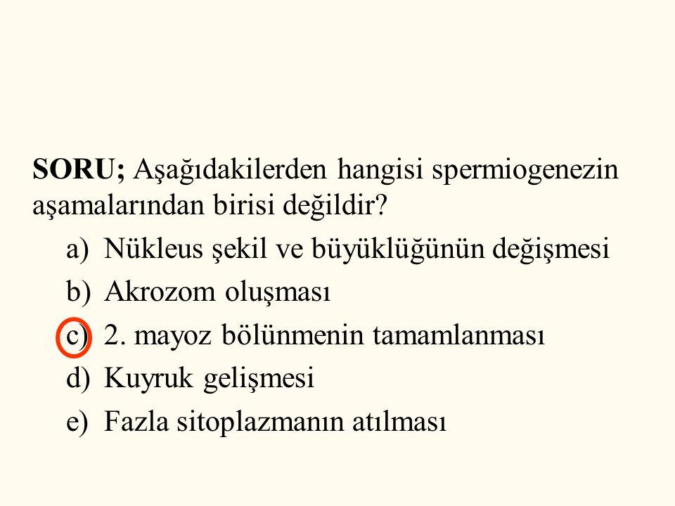 SORU; Aşağıdakilerden hangisi spermiogenezin aşamalarından birisi değildir? a)Nükleus şekil ve büyüklüğünün değişmesi b)Akrozom oluşması c)2. mayoz bö