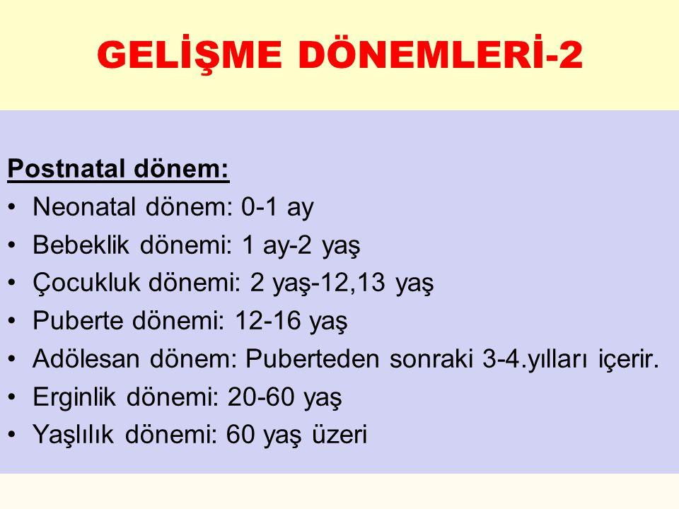 1.Spermatogonium 2. Primer Spermatosit 3. Sekonder Spermatosit 4.