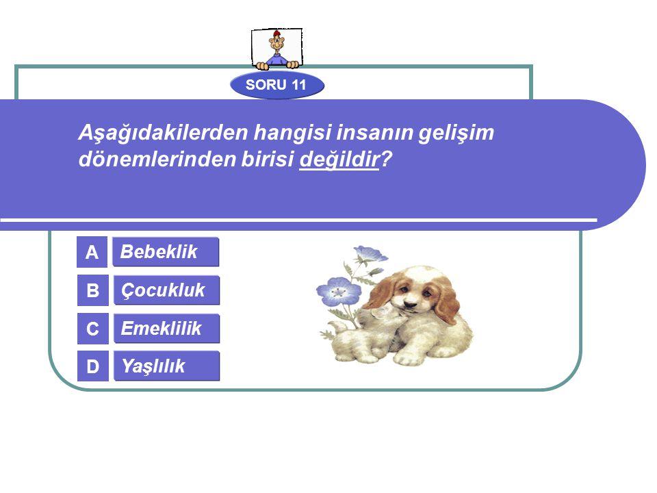 SORU 11 Bebeklik Çocukluk Emeklilik Yaşlılık A B C D Aşağıdakilerden hangisi insanın gelişim dönemlerinden birisi değildir?